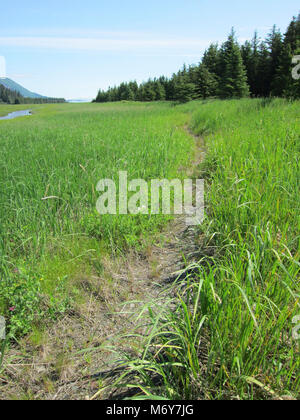 Bear Trails   . Bear trails lead into the salt marsh from the forest surround the eastern bear viewing area. - Stock Photo