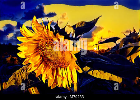 Illustration of a sunflower at sunset - Stock Photo