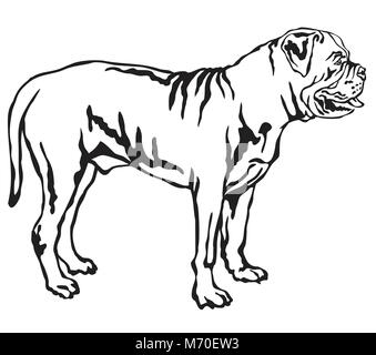 Decorative portrait of standing in profile Dog Boerboel, vector isolated illustration in black color on white background - Stock Photo