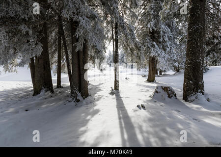 The sun shines through between two fir trees in a winter landscape in Switzerland - Stock Photo