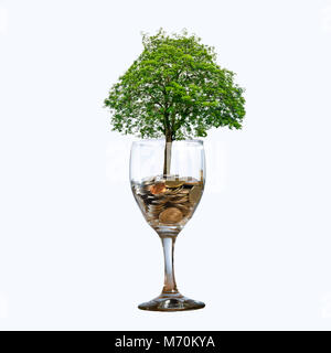 tree Coin glass Isolate hand Coin tree The tree grows on the pile. Saving money for the future. Investment Ideas - Stock Photo