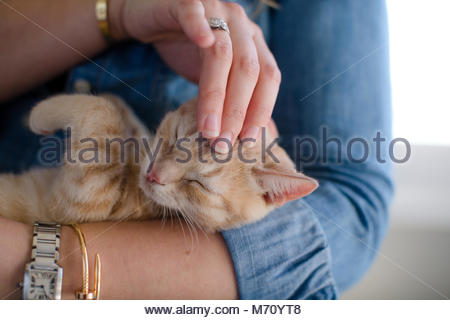 Close up of orange tabby kitten with eyes closed while being petted on head by woman - Stock Photo