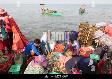 Kep Cambodia - Crab fishermen bringing the crab catch to the market for sorting and selling by the women on the - Stock Photo
