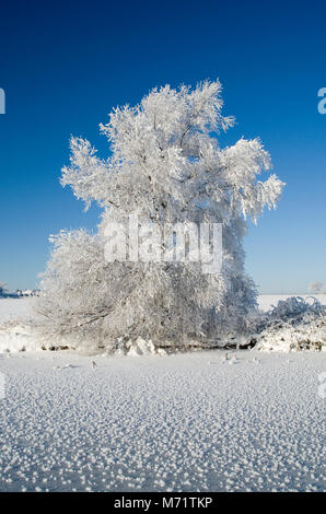 Frost covered silver birch tree on the banks of a frozen Leeds Liverpool canal, Rufford, Lancashire, England, Christmas - Stock Photo