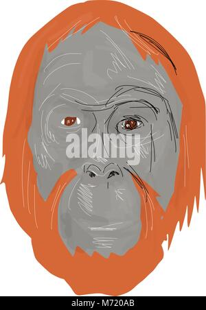 Drawing sketch style illustration of head of an unflanged male orangutan, an extant species of great apes native - Stock Photo