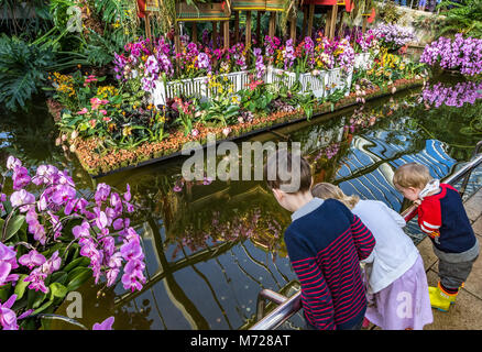 Three young children looking at the reflection of Orchids in the still water of the pond  in The Princess of Wales - Stock Photo