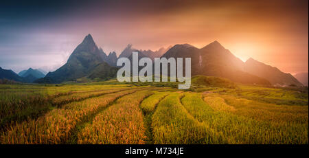Rice fields on terraced with Mount Fansipan background at sunset in Lao Cai, Northern Vietnam. Fansipan is a mountain - Stock Photo