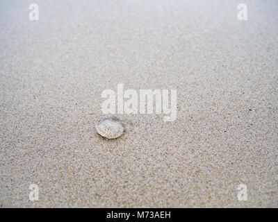 Small jelly fish on the sand beach - Stock Photo