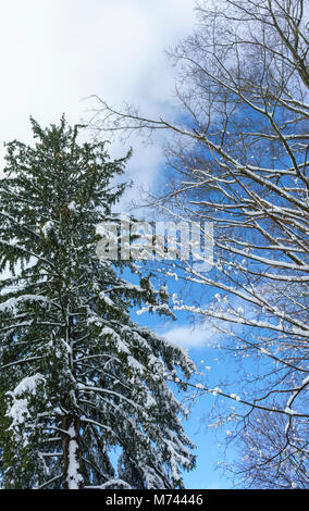 Chappaqua, NY, USA, 8th March 2018. Biggest snowstorm in years buries suburban Chappaqua, New York with up to 13.5 - Stock Photo