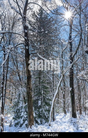 Beautiful woods with a sunstar. Trees are covered with snow in the winter. A peaceful scenic image of New York State. - Stock Photo