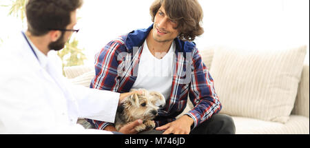 veterinarian conducts an examination of the Yorkshire terrier. - Stock Photo