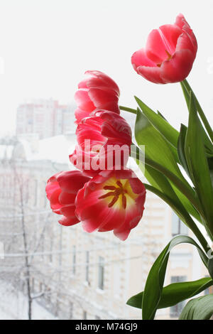 Bouquet of five red tulip flowers against window. Street view from the room on a snowy cloudy winter day - Stock Photo
