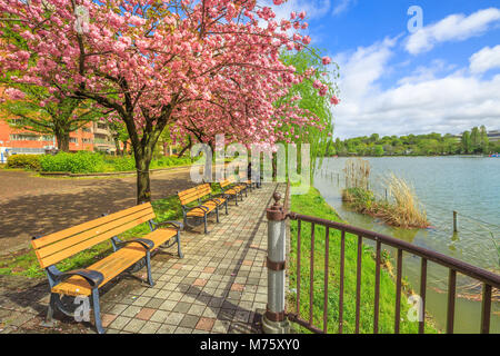 Unidentified person contemplates sitting on a bench on Shinobazu Pond in Ueno Park, central Tokyo during cherry - Stock Photo