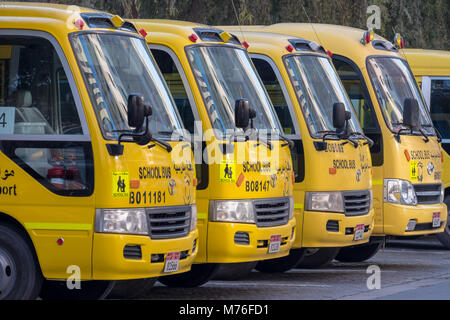 Abu Dhabi, UAE Yellow School Buses Parked under the trees - Stock Photo