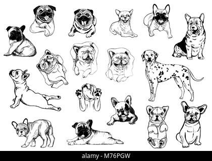 Set of hand drawn sketch style dogs isolated on white background. Vector illustration. - Stock Photo