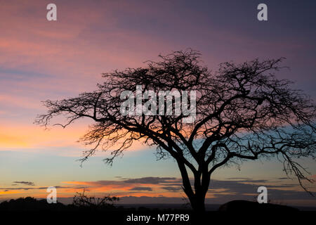 Pink clouds and blue sky at sunrise in Serengeti National Park, UNESCO World Heritage Site, Tanzania, East Africa, - Stock Photo