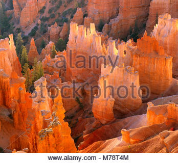 Hoodoos, Wall Street, Bryce Canyon National Park, Utah - Stock Photo