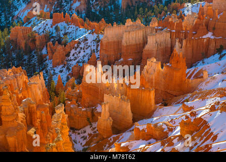 Sunrise, Wall Street, Bryce Canyon National Park, Utah - Stock Photo