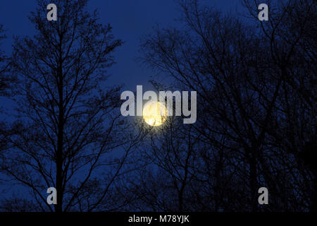 Super Blue Moon early morning close to western horizon. Second of two full moons to rise in January 2018. North - Stock Photo