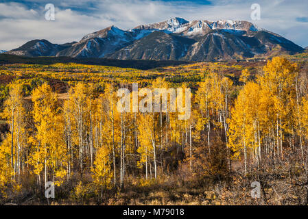 Mount Gunnison, aspens in fall foliage, seen from West Elk Loop Scenic Byway, Gunnison National Forest, West Elk - Stock Photo
