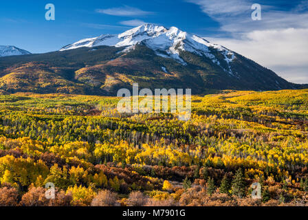 West Beckwith Mountain, aspens in fall foliage, seen from West Elk Loop Scenic Byway, Gunnison National Forest, - Stock Photo