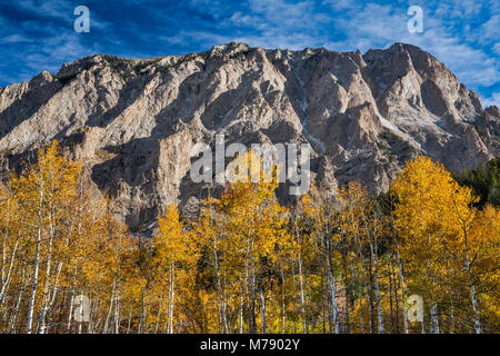 Marcellina Mountain, aspens in fall foliage, seen from West Elk Loop Scenic Byway, Gunnison National Forest, West - Stock Photo