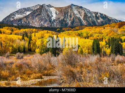 East Beckwith Mountain, aspens in fall foliage, seen from West Elk Loop Scenic Byway, Gunnison National Forest, - Stock Photo