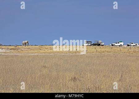 Africa, South-West Africa, Namibia, Etoscha National Park, elephant, Oryx antelops, jeep, - Stock Photo