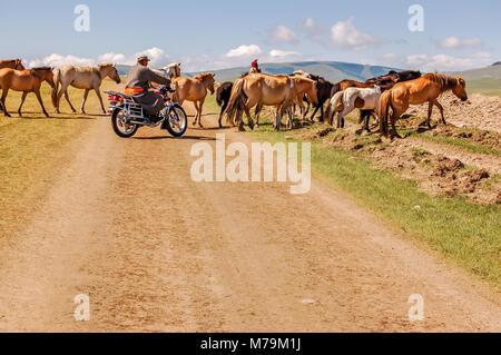Shine-Ider District, Mongolia -  July 22, 2010: Mongolian men on motorbike & horseback herd horses across dirt track - Stock Photo