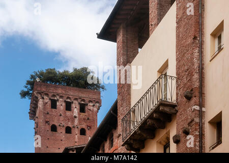 The beautiful medieval Guinigi Tower with holm oak trees on top, Lucca, Tuscany, Italy, from below - Stock Photo