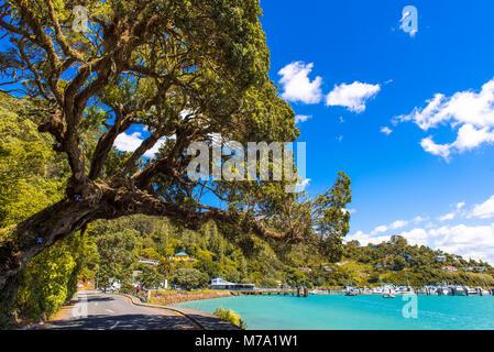 Tree overhanging road, looking towards the marina at Whangaroa, North Island, New Zealand - Stock Photo