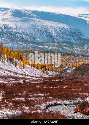 A perfect mixture of autumn and winter in the Altai Mountains. Water stream flows through the red bushes and yellow - Stock Photo