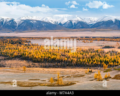 Stunning view to a vast valley, full of yellow larches, with snow capped mountains at the background. Autumn at - Stock Photo