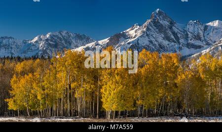 Hayden Peak in Sneffels Range under snow, aspen grove in fall foliage, view from San Juan Skyway National Scenic - Stock Photo