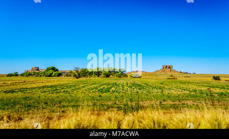Fertile Farmland of the Free State province in South Africa under blue sky - Stock Photo