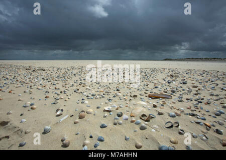 Dark clouds over the sand spit littered with mussels on the Osterhook in the east of the East Frisian island of - Stock Photo