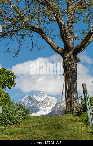 Rake leans against the tree in garden in front of alpine scenery in South Tirol - Stock Photo