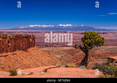 The USA, Utah, San Juan county, Moab, Canyonlands National Park, Island in the Sky, view close Grand View Point - Stock Photo