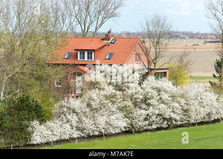Germany, Lower Saxony, East Frisia, Krummhörn, residential house in the countryside, close the lighthouse of Pilsum, - Stock Photo