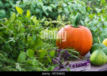 Pumpkins and garden herbs - Stock Photo