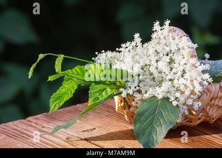 Elderflower juice, herbs - Stock Photo