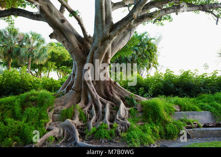 Coconut palm trees in a grove - Stock Photo