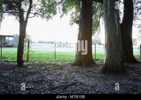 Dried autumn leaves with trees in a field at sunrise - Stock Photo