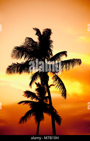 Silhouette of palm trees on the beach at sunset, Miami Beach, Florida, USA - Stock Photo