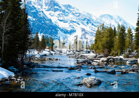 River flowing through a forest, Yellowstone National Park, Wyoming, USA - Stock Photo