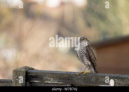 A Clear Photograph Of A Perching Bird Stock Photo Alamy
