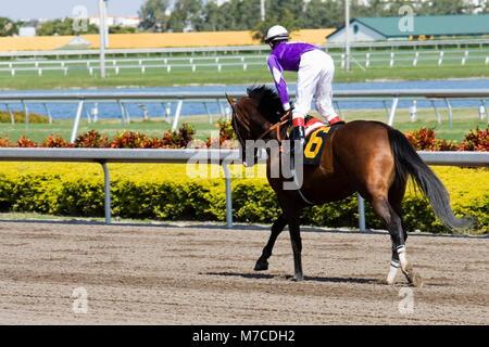 Jockey riding a horse in a horse race - Stock Photo