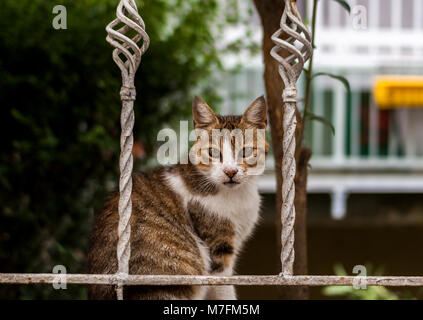 Street Cat with Gorgeous Eyes Sitting in the Fence - Stock Photo
