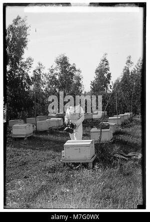 Zionist colonies on Sharon. Borochov. Girls' farm, bee culture LOC matpc.00203 - Stock Photo