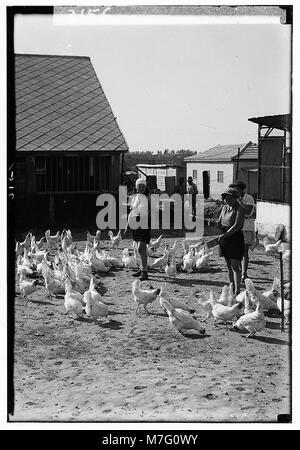 Zionist colonies on Sharon. Borochov. Girls' farm, feeding poultry LOC matpc.00202 - Stock Photo